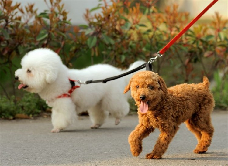 5 color New Double Multiple Dual Coupler 2 Way Two Pet Dogs Nylon Dog Pet Walking Leash Puppy Leads PG24 (4)