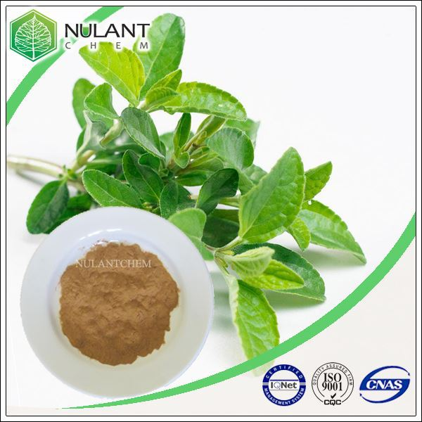 500g Sage Extract 10-1 sample