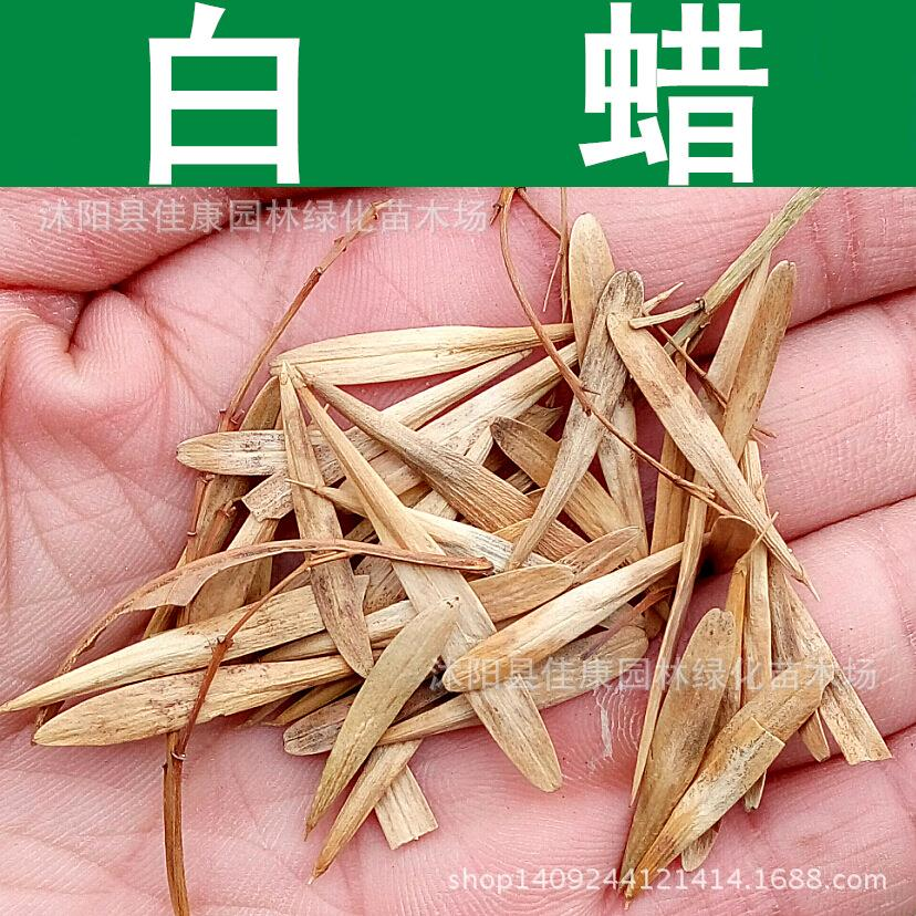 Ash tree seeds freshly collected seeds of fast-growing palm wood ash ash Shuqing white wattle seed real shot 200g / Pack(China (Mainland))