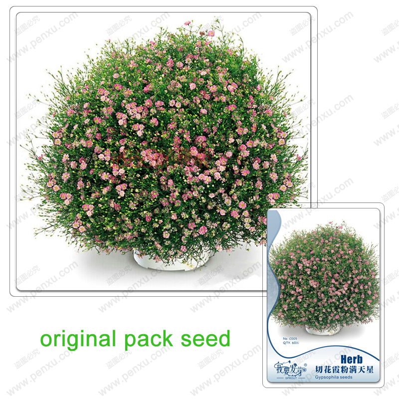 Original Pack 60 Seeds / Pack,Beautiful Gypsophila paniculata seeds,pink stars flower,Starry potted plants flower seeds(China (Mainland))