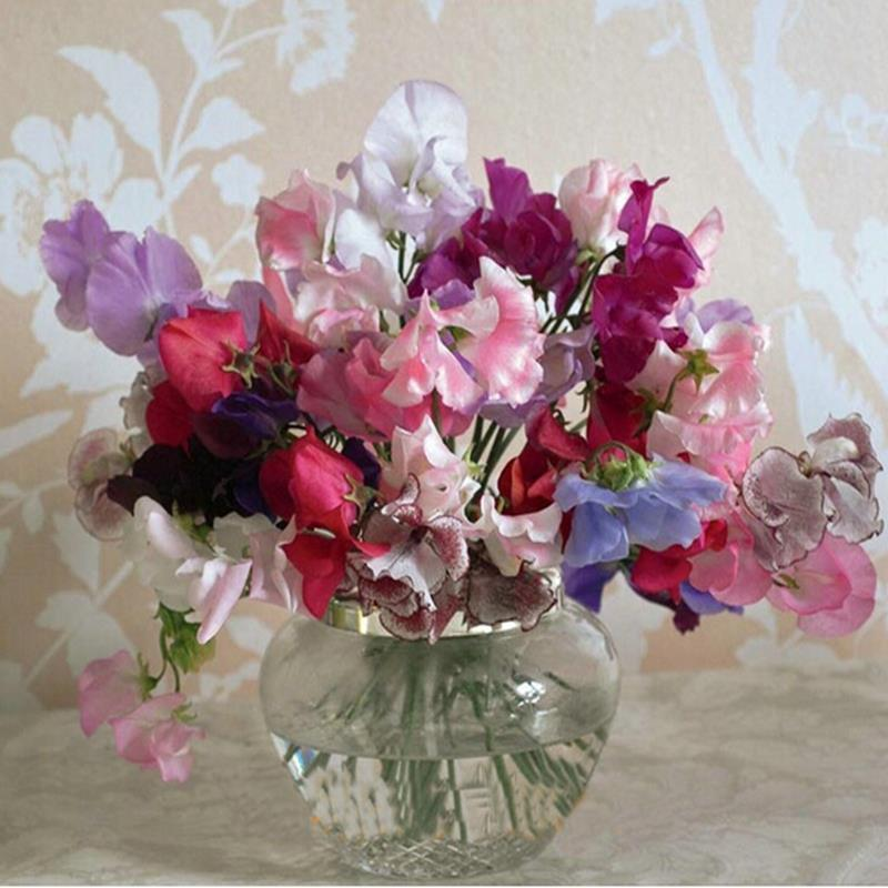 Royal Sweet Pea Mix seeds 10 pcs The royal lavender Annual aromatic varieties(China (Mainland))