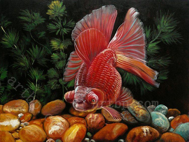 Natale pesci rossi acquista a poco prezzo natale pesci for Pesci rossi costo