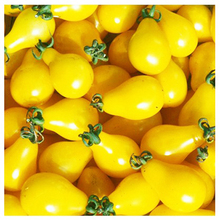 Buy 3 Packs Tomato Seed / 1 Pack 30 Seeds Yellow Lycopersicon Esculentum Vegetable Fruit Seeds B038 for $1.69 in AliExpress store