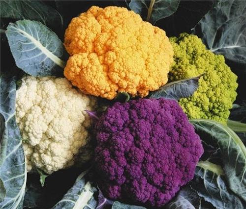 Kapusta głowiasta, brukselka, kalafior i brokuł