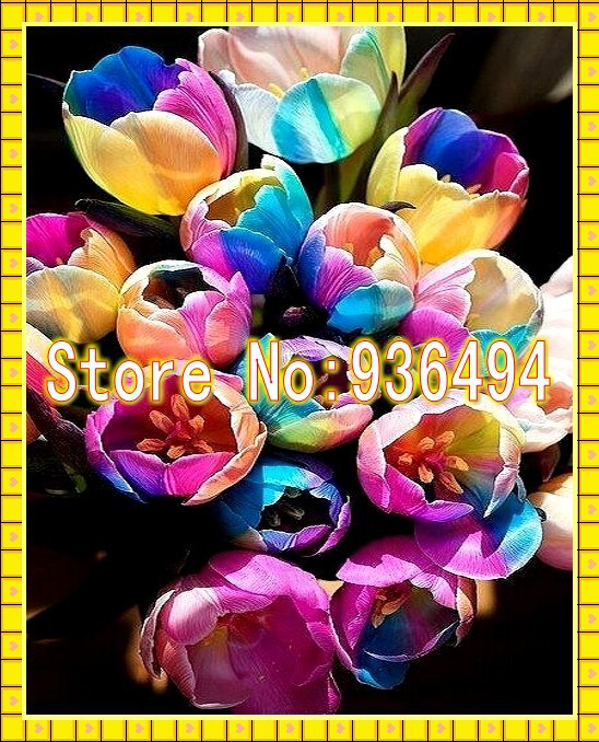 Buy 1 bag red sunflower flower seeds fruit vegetable for Where can i buy rainbow roses in the uk