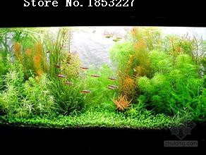 New Fresh Free Shipping Hot selling 50pcs aquarium grass seeds water aquatic plant seeds (35 kinds) family easy plant seeds(China (Mainland))