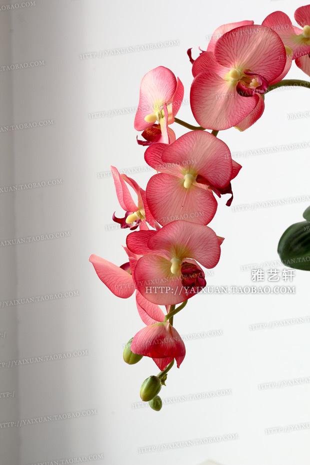 Decorativi orchidea acquista a poco prezzo decorativi for Orchidea prezzo