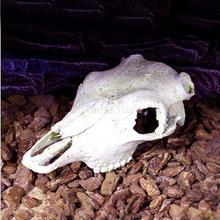 Reptile Vivarium Decoration Tortoise Lizard Breading Hide Cave Aquarium Ornament Resin Platypus Skull (China (Mainland))