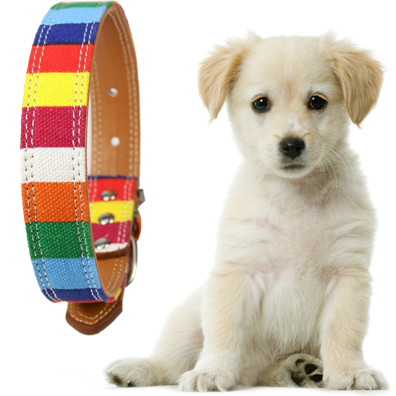 Adjustable Pet Dog collar Designer Collar For Large Dog Leather Plain collar for big small dog Colorful Rainbow Dog collar(China (Mainland))