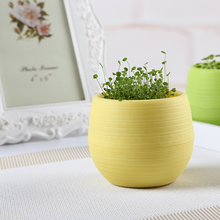 210pcs/lot Cute Creative Candy Bosai Plastic Plant Pot 5 Colors Violet Love Grass Basil Clover Green Diamond seed Home Decor(China (Mainland))