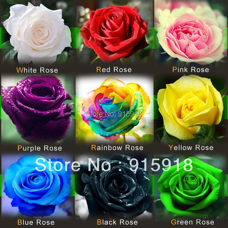 Buy flower seeds 1800 pcs rose seeds for 1800 flowers bonsai