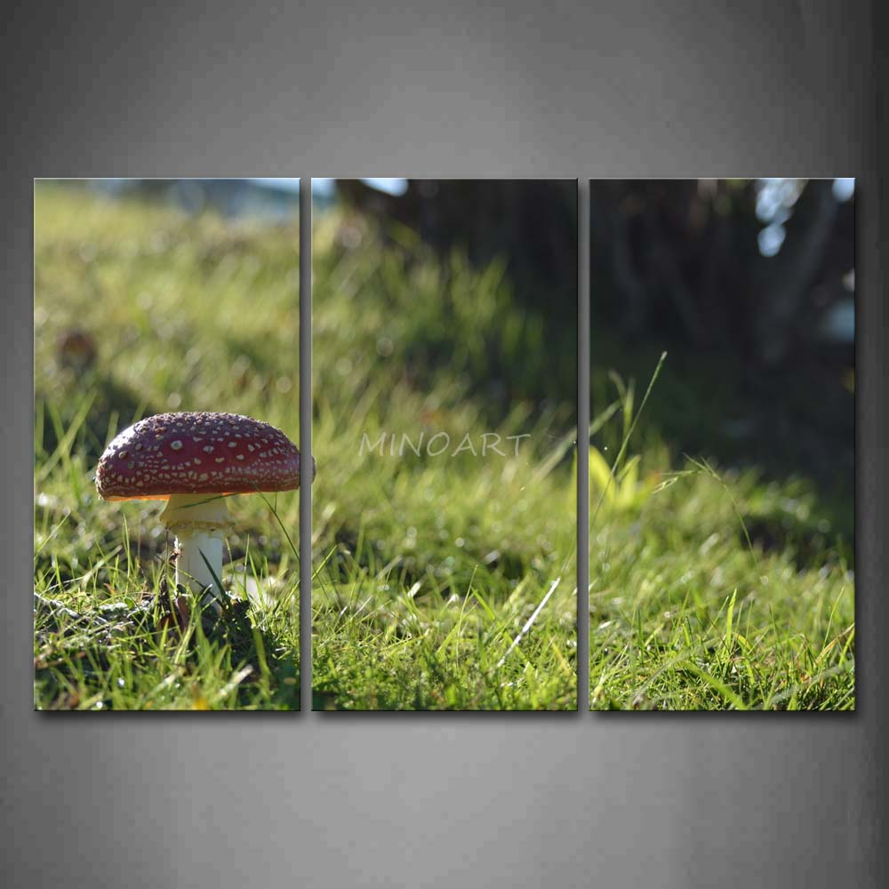 3 Piece Wall Art Painting Mushroom Grow On Grassland Picture Print On Canvas Botanical 4 The Picture Home Decor Oil Prints(China (Mainland))