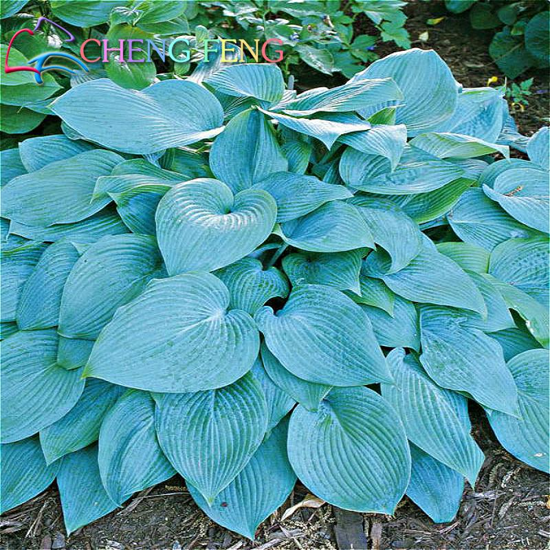 Popular Ground Cover Plants Buy Cheap Ground Cover Plants