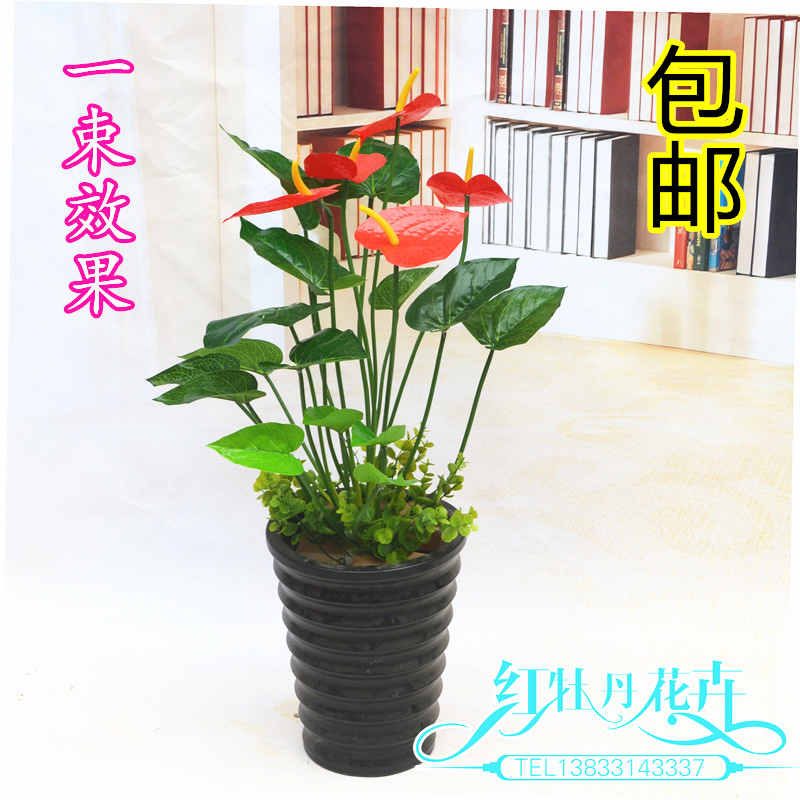 The living room floor conference room set flower flowers placed potted plant simulation of Anthurium table decorative flower who(China (Mainland))
